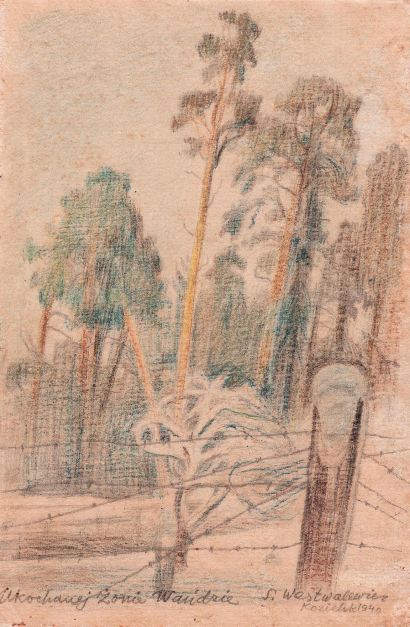 Rysunek przedstawiający sosny zaogrodzeniem zdrutu kolczastego. Stanisław Westwalewicz, Sosny, rys. kredkami, 1940